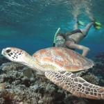 Sailaway_Turtle