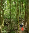 Mossman-gorge-tour