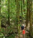 mossman-rainforest-tour