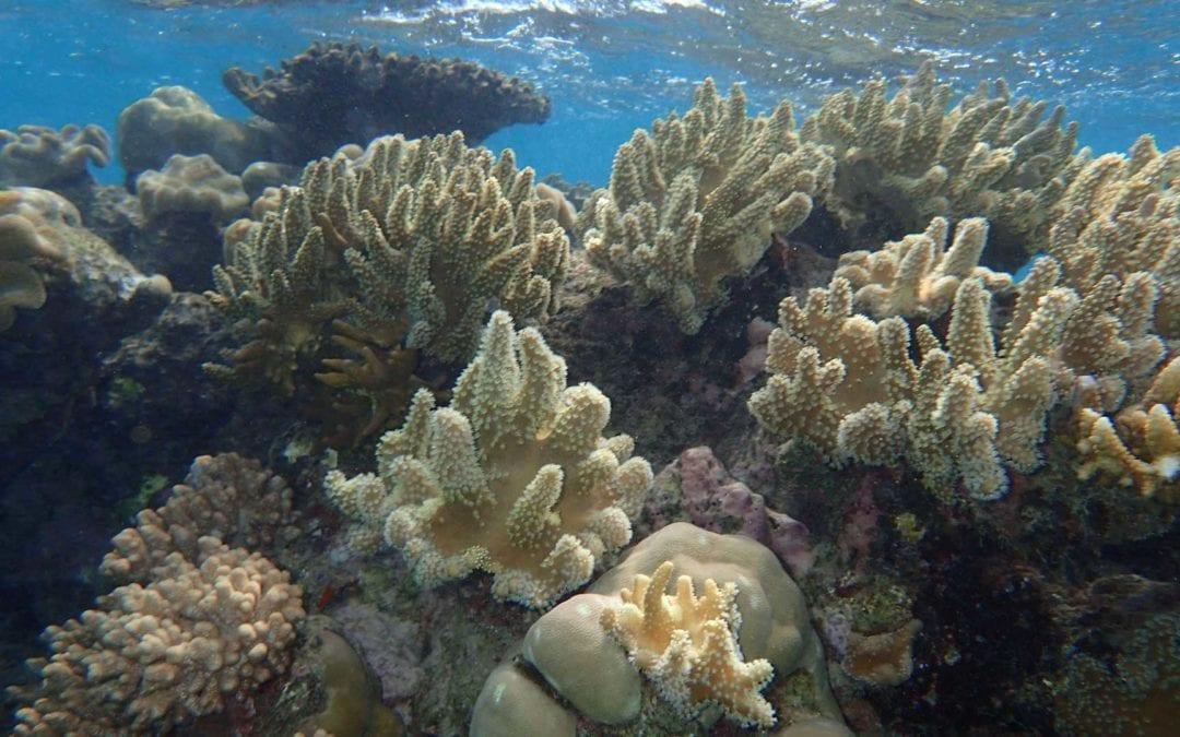 Sailaway-Mackay-Coral-Cay-soft-coral-&-reflection