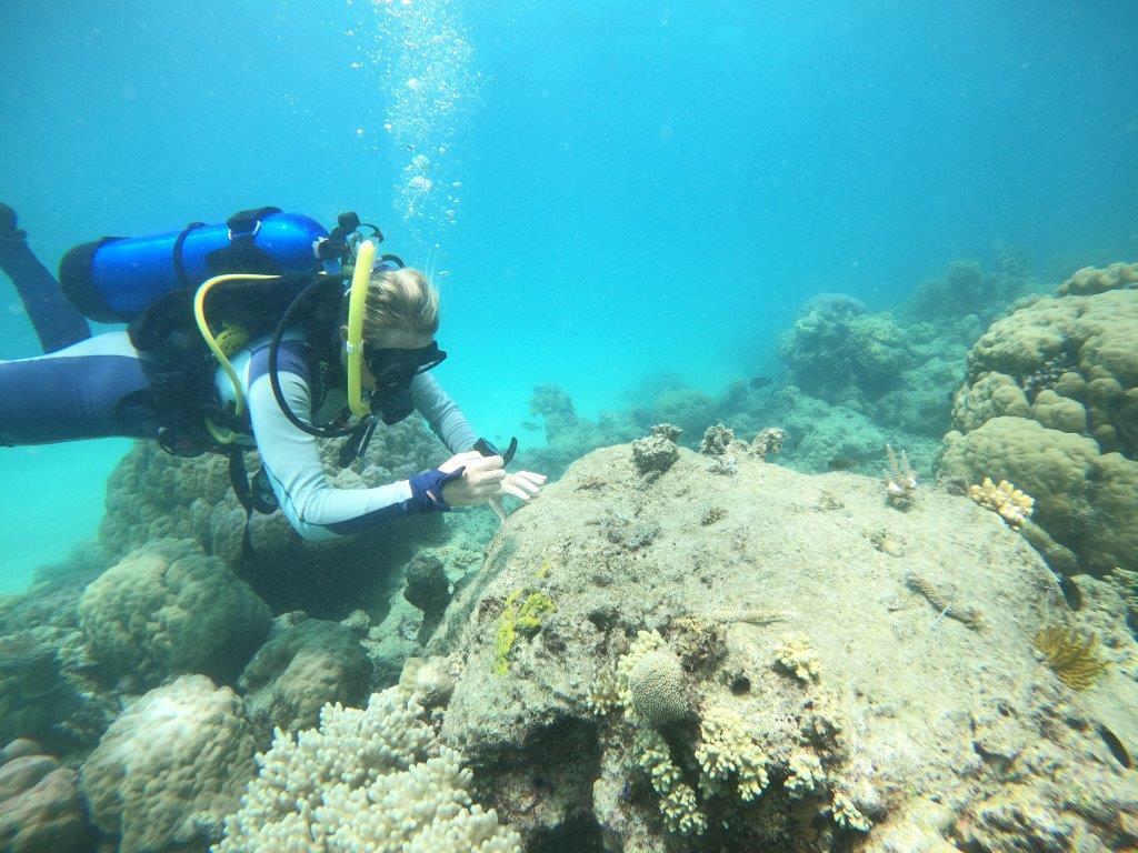 Coral Nurture Image 1