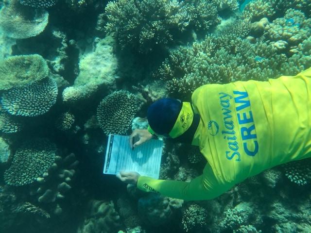 Eye On The Reef Img2