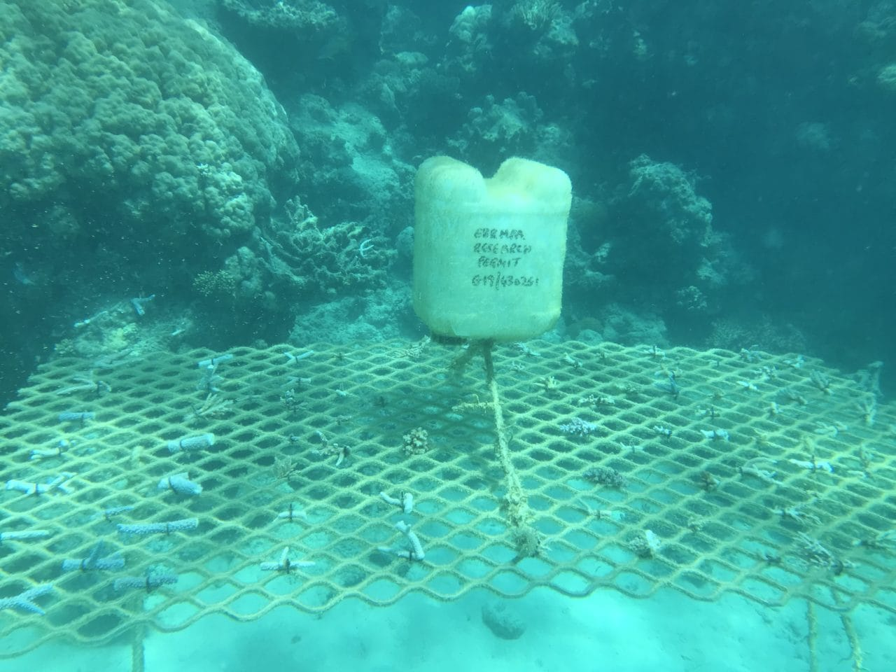 Underwater photo of a coral frame at Mackay Cay on 6 Sep 19