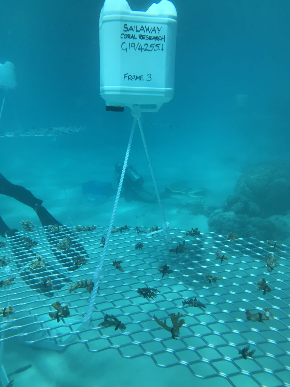 Underwater photo of Frame #3 installation at Mackay Cay on 6 Sep 19