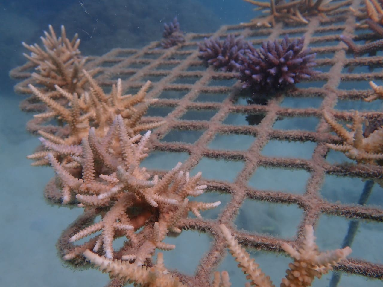 Underwater closeup photo of a coral frame on 16 Apr 20