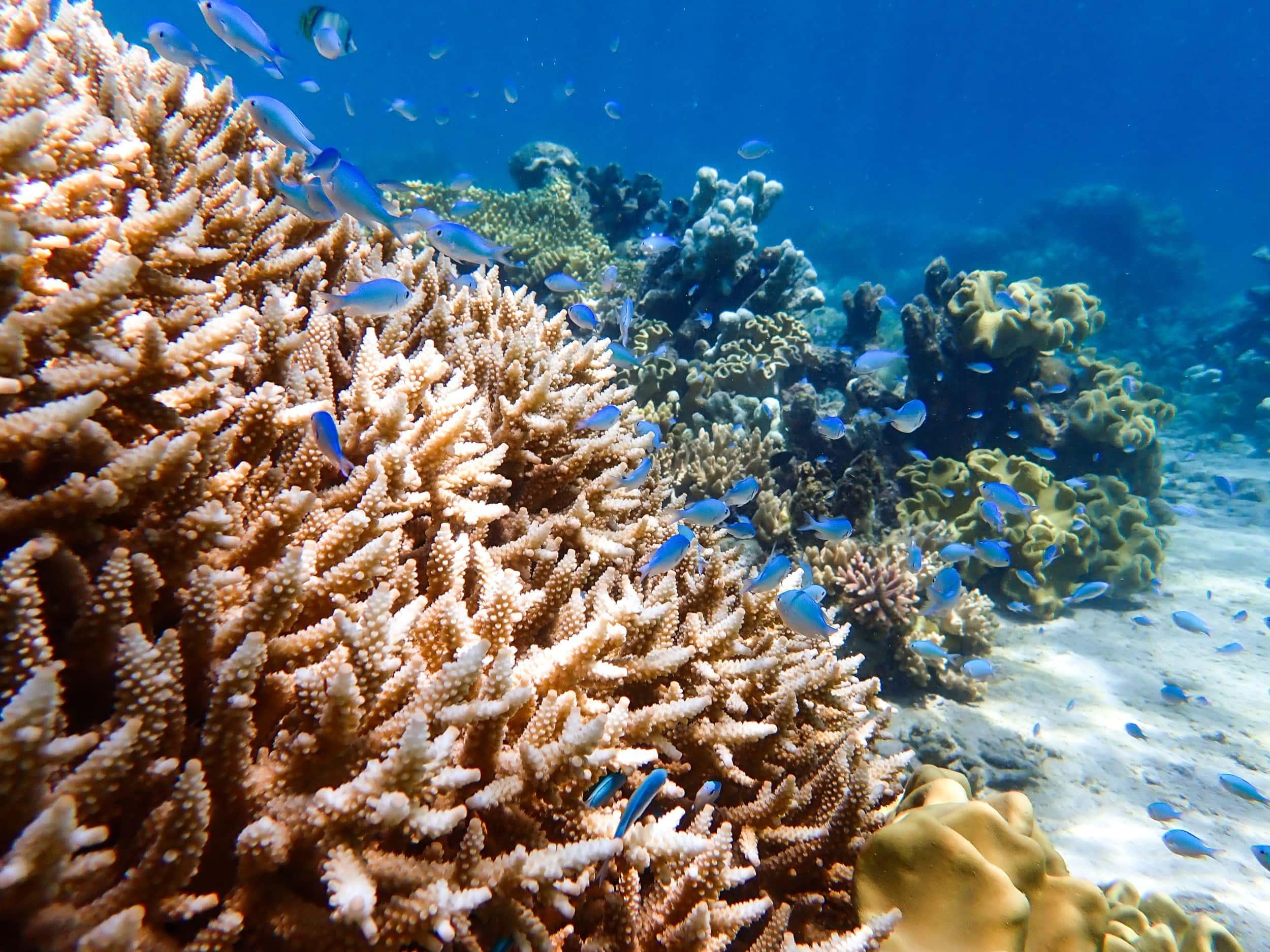 Mackay Cay Reef 1 Web