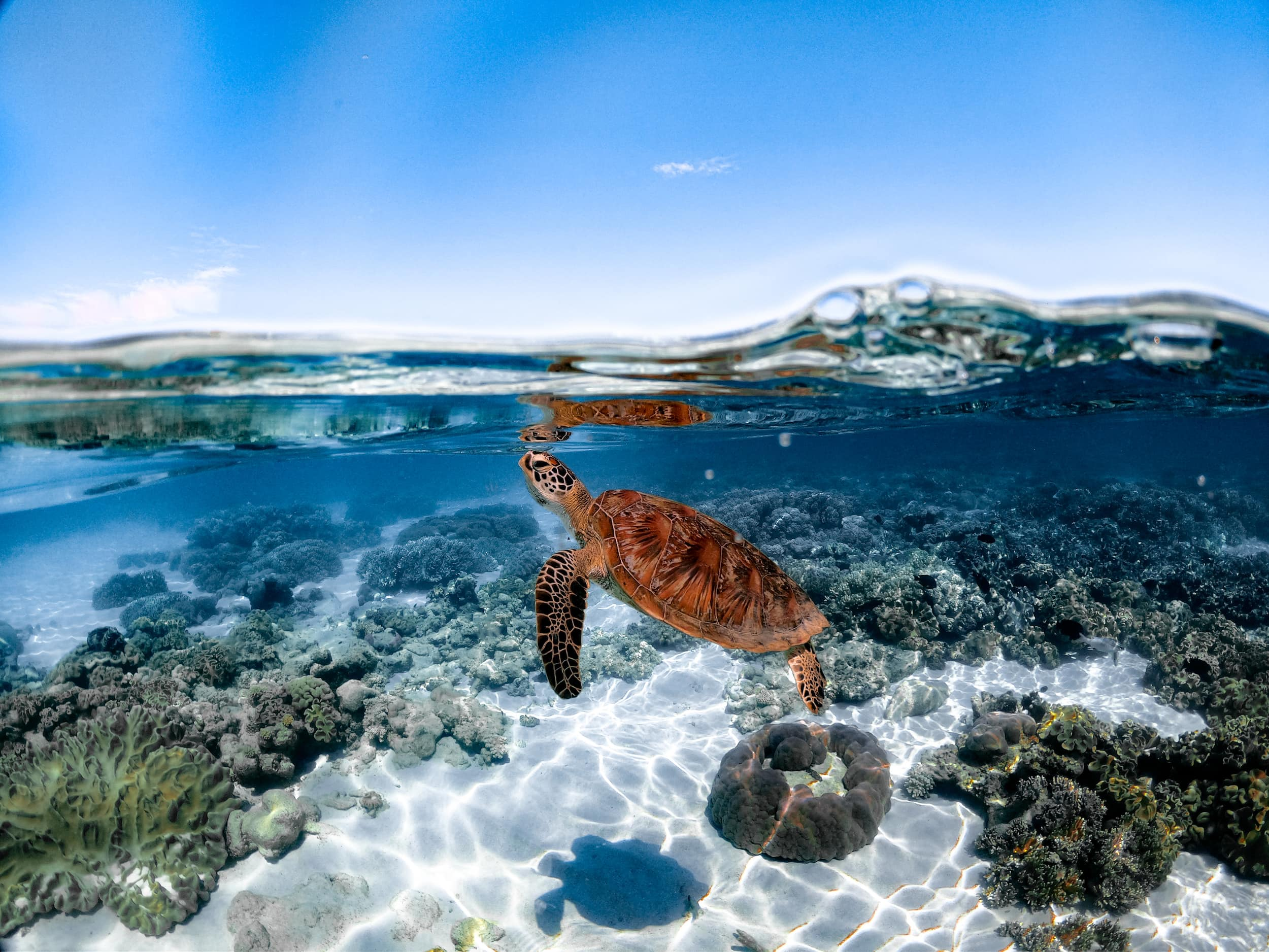 Sailaway Mackay Turtle