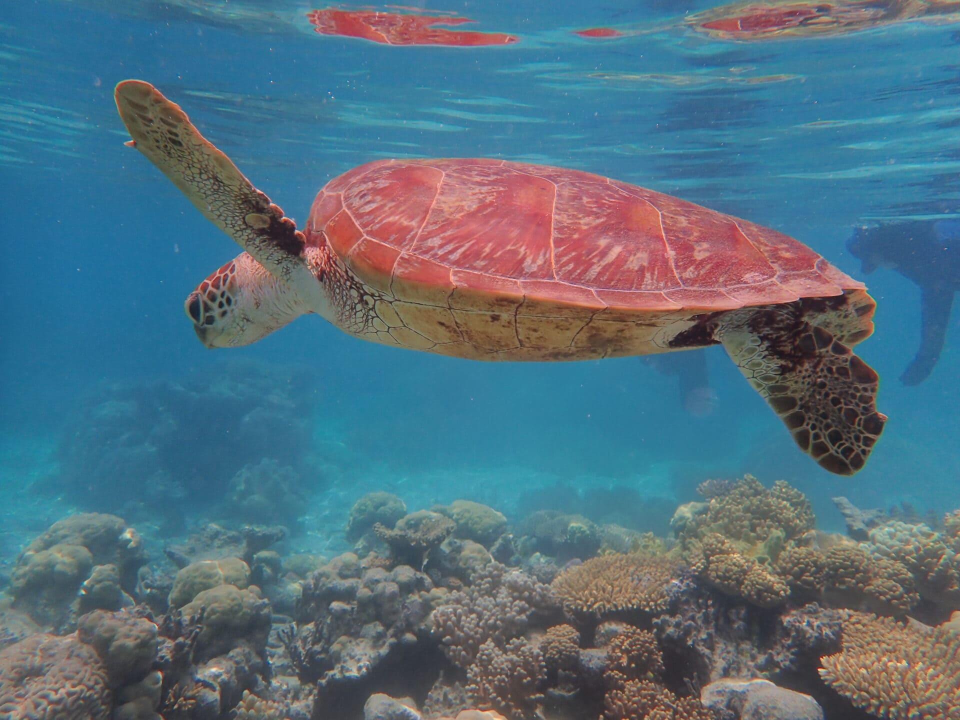 Chill Turtle