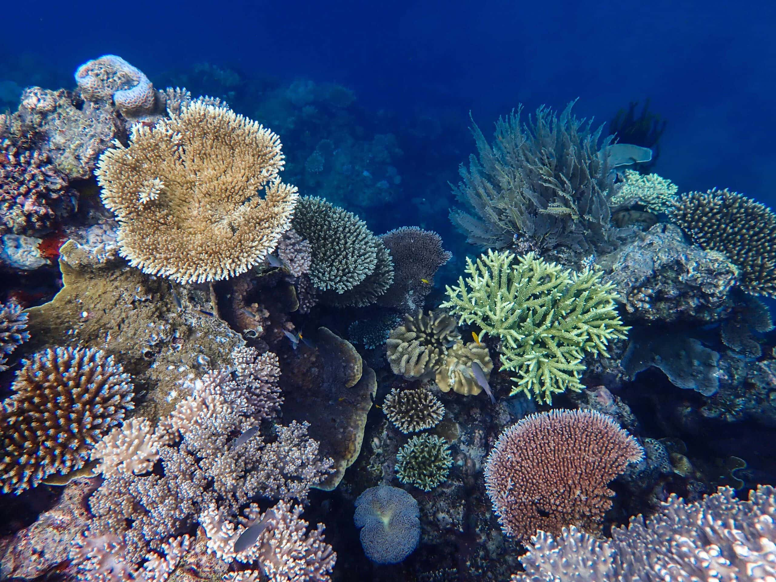 Mackay Coral Cay Reef Brooke