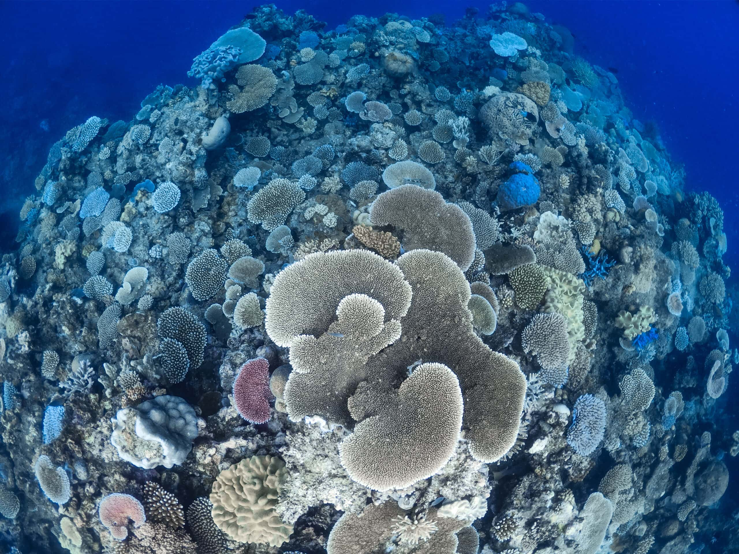 Outer Reef 3